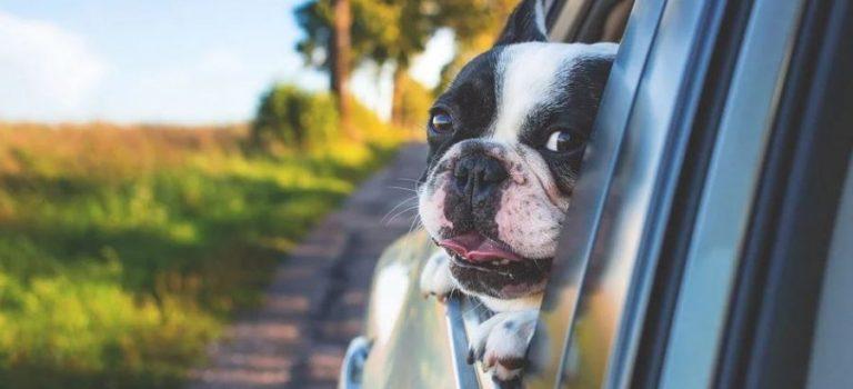 Les meilleures protections de voiture pour chiens