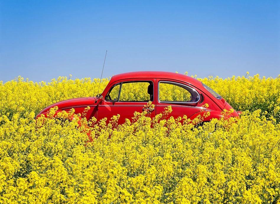 voiture dans un champs